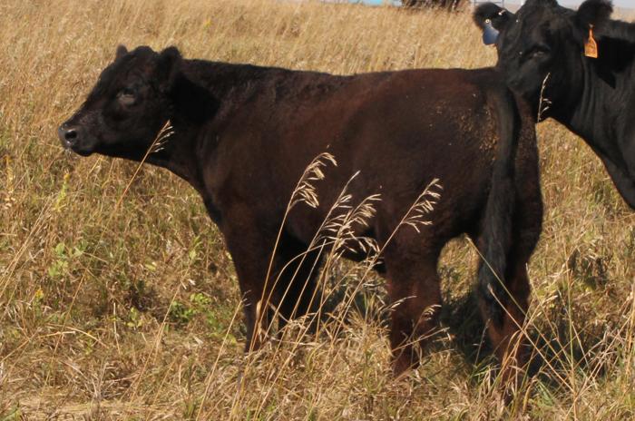 #W-14 - Trading Favors x Macho - Steer